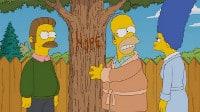 Un arbol crece en Springfield